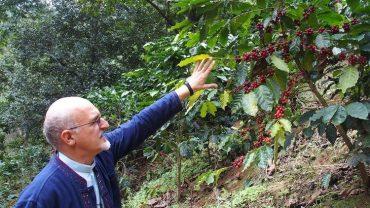 Café Bruno: aroma y respeto a la creación